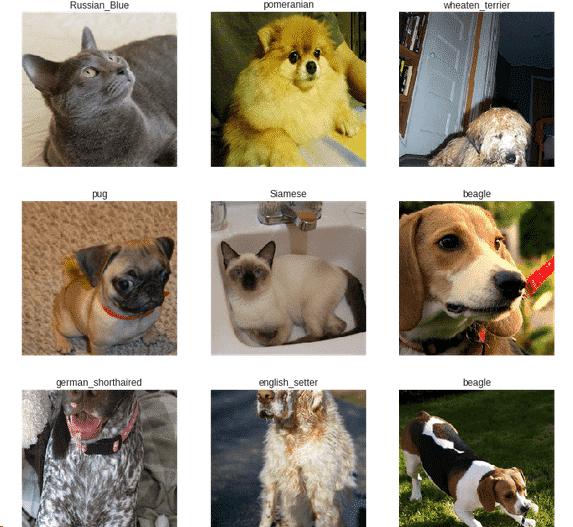 Clasificación de imágenes