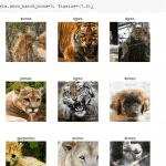 clasficación de imágenes